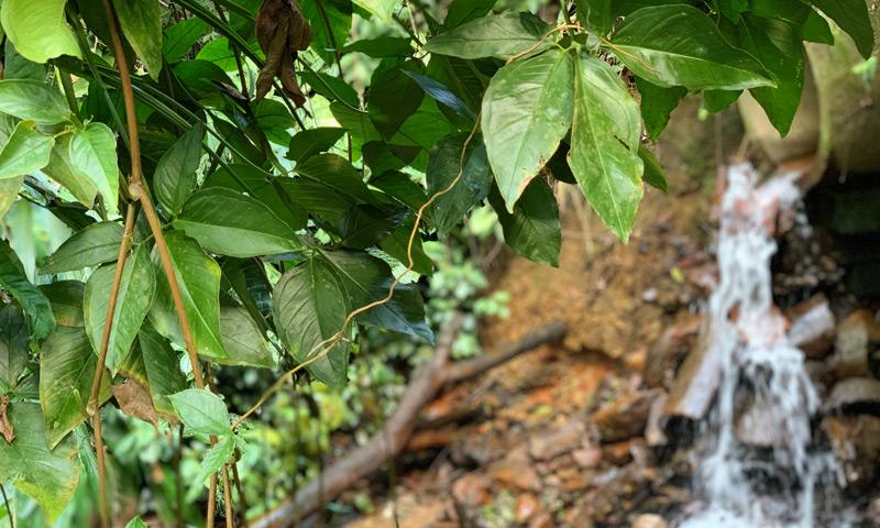 candomblè-milano-le-foglie